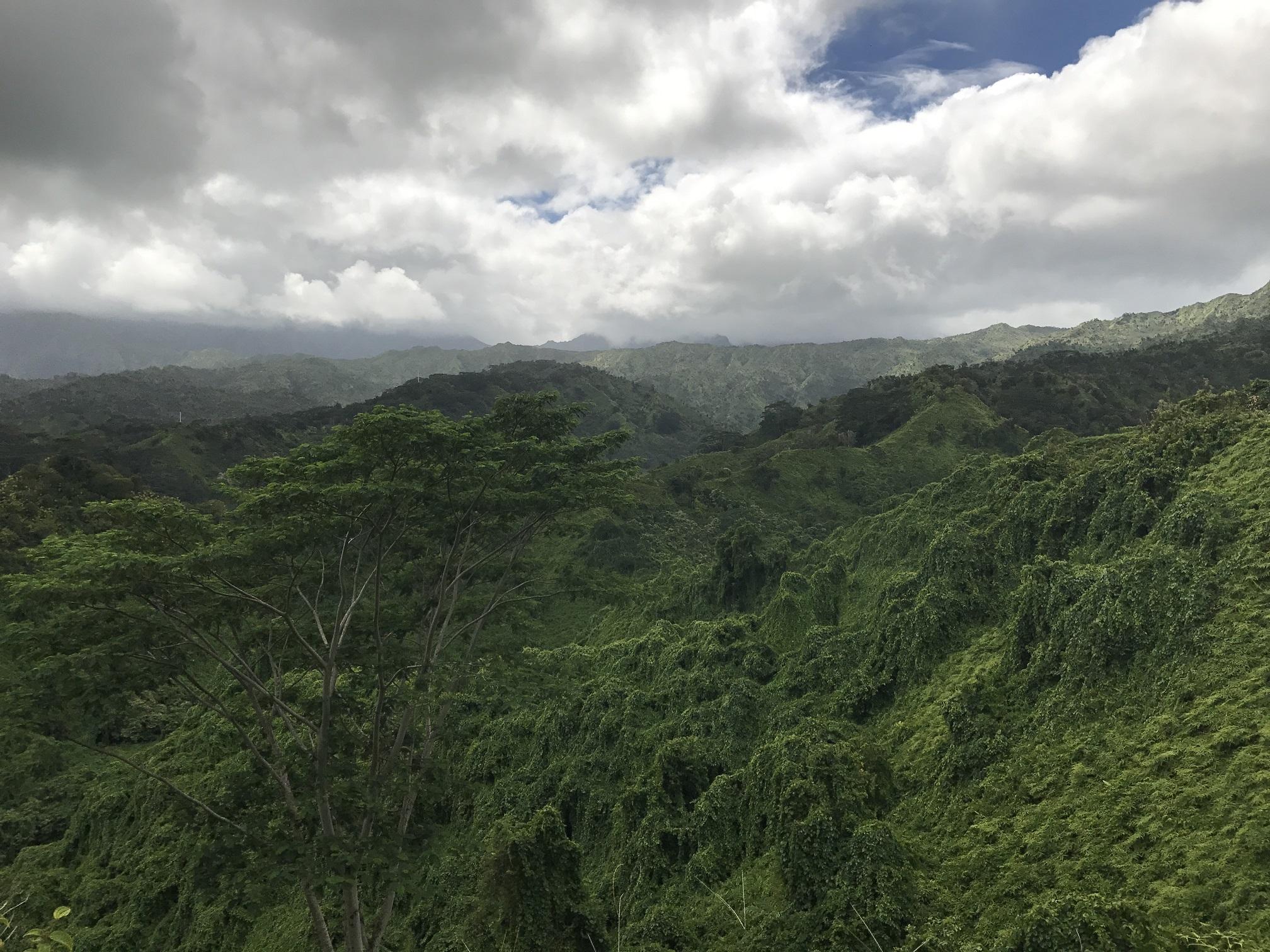 Vue depuis la Kuilau trail. Le lierre qui envahit les arbres leur donne des silhouettes que je trouve fascinantes.