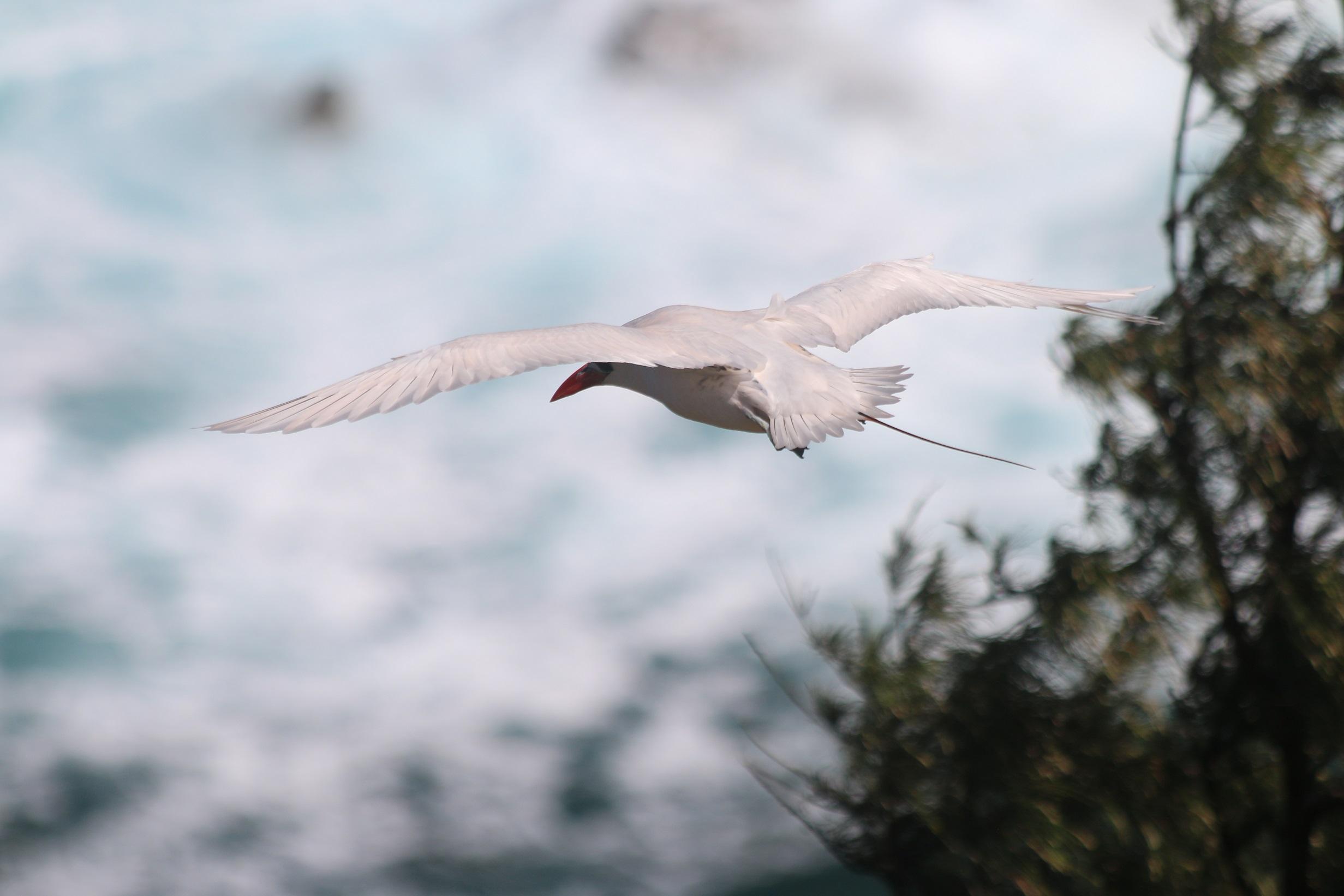 Les oiseaux sont nombreux à jouer dans les courants aériens du Kilauea Point Refuge